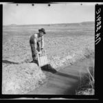 """Opening the gate that allows water to flow into the field from irrigation ditch. New Mexico"""