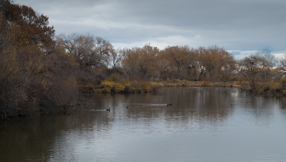 Rio Grande Nature Center, Albuquerque, John Fleck, December 2013