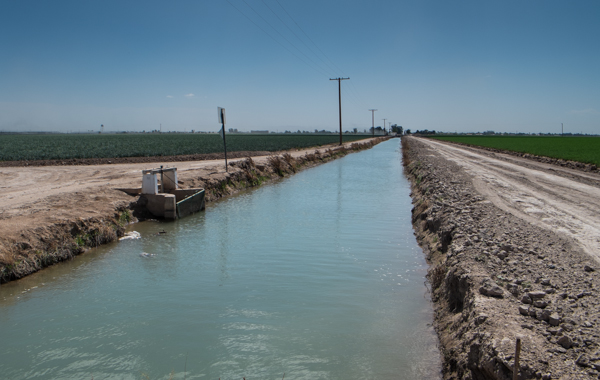 Wheat, right, and onions with a canal, Imperial Valley, March 2014