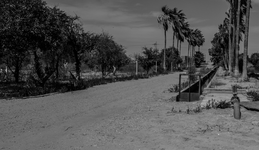 abandoned orange grove, Baja side of the Colorado River, Mexicali Valley, March 27, 2014