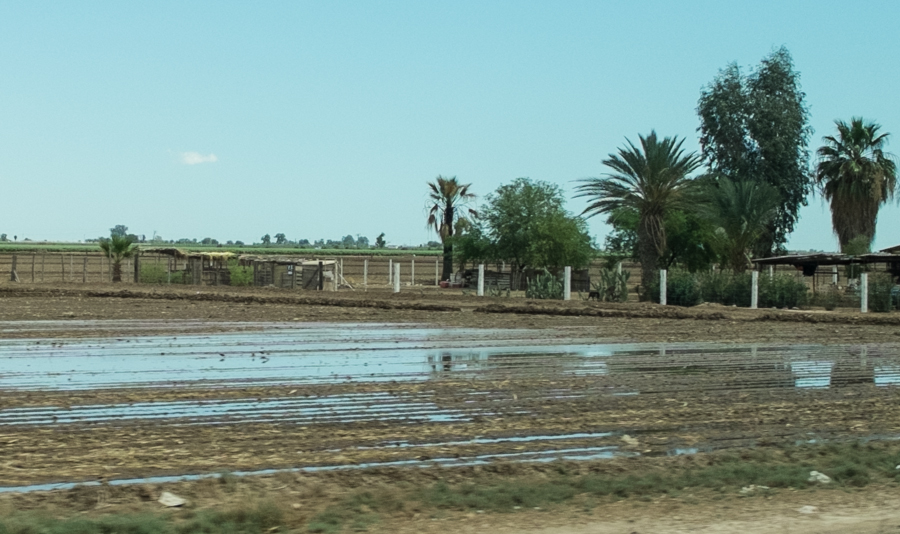 flood irrigation, Mexicali Valley, March 2014