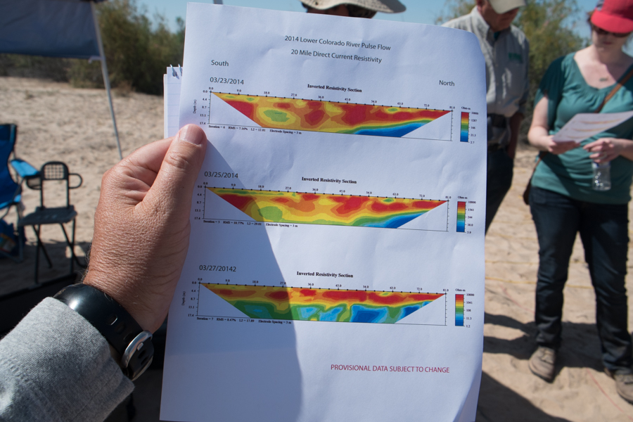 measurements show rising groundwater in a newly wetted stretch of the Colorado River, March 28 2014