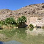 Rogers Spring, Lake Mead National Recreation Area