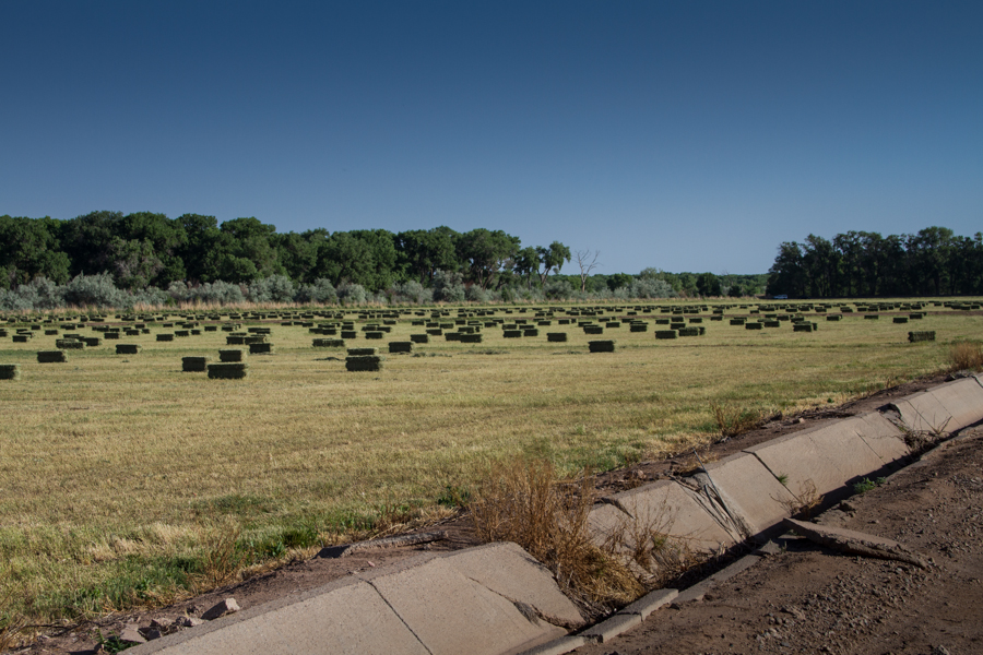 Hay bales at Valle do Oro in Bernalillo County's south valley, June 2014