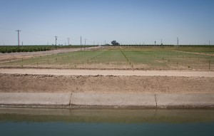 One farm district at a time.... A citrus orchard going in, Yuma Mesa Irrigation and Drainage District, Arizona