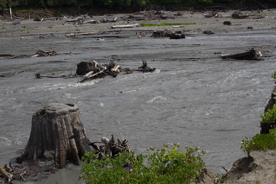 the former Lake Aldwell, Elwha River, by L. Heineman, May 2013