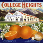 College Heights Washington navels