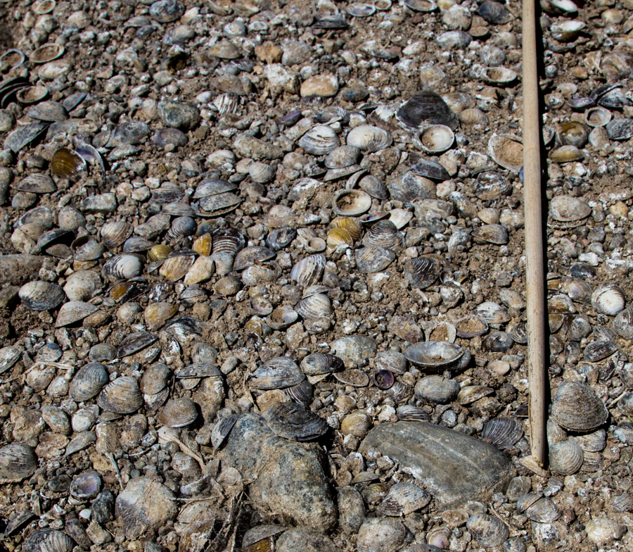 Dead River Clams, Rio Grande, Hatch New Mexico,  April 29, 2013, by John Fleck
