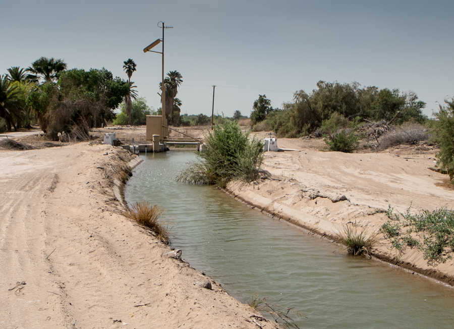 Irrigating a palm oasis from an Imperial Irrigation District canal, by John Fleck, March 2014