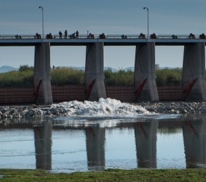 "The Colorado River ""pulse flow"" begins. Morelos Dam, March 23, 2014, by John Fleck"
