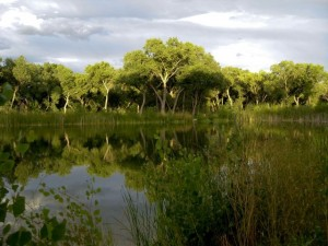 Tingley ponds, Albuquerque, August 2010